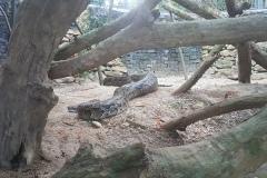 Cebu Safari park - Had