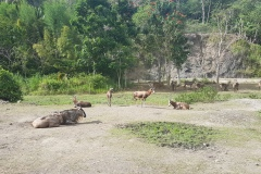 Cebu Safari park - Africká savana