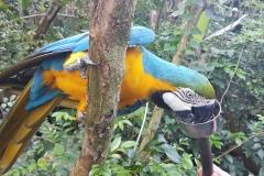 Cebu Safari park - Krmení papoušků