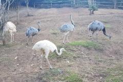 Cebu Safari park - Ptáci Emu