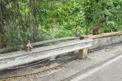 Opice na rozbouraném mostě před Oslobem